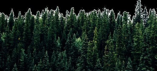 Reforestation 1